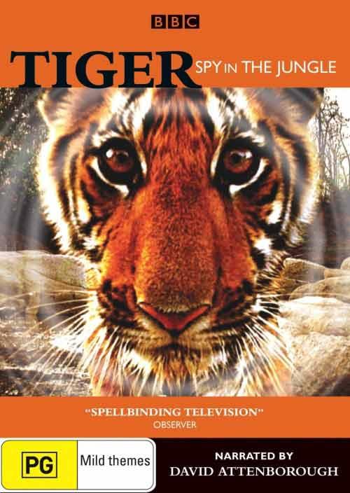 Tygrysy w ukrytej kamerze