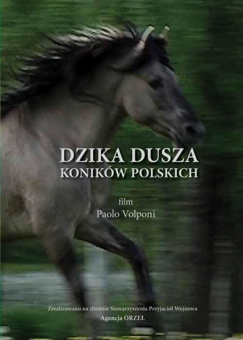 Dzika dusza koników polskich